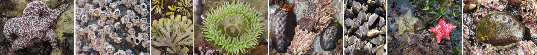Pacific Rocky Intertidal Monitoring Banner Image - Full