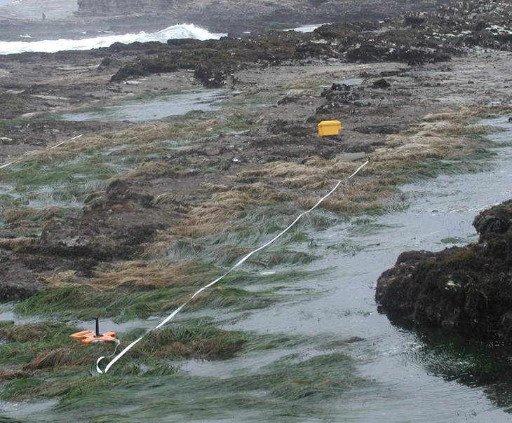 Line transect distance sampling software